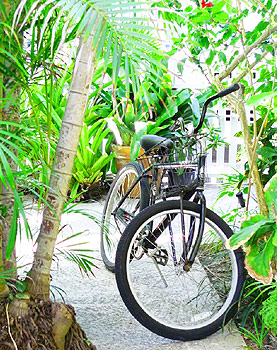 Bikes In Key West Key West Rentals Key West